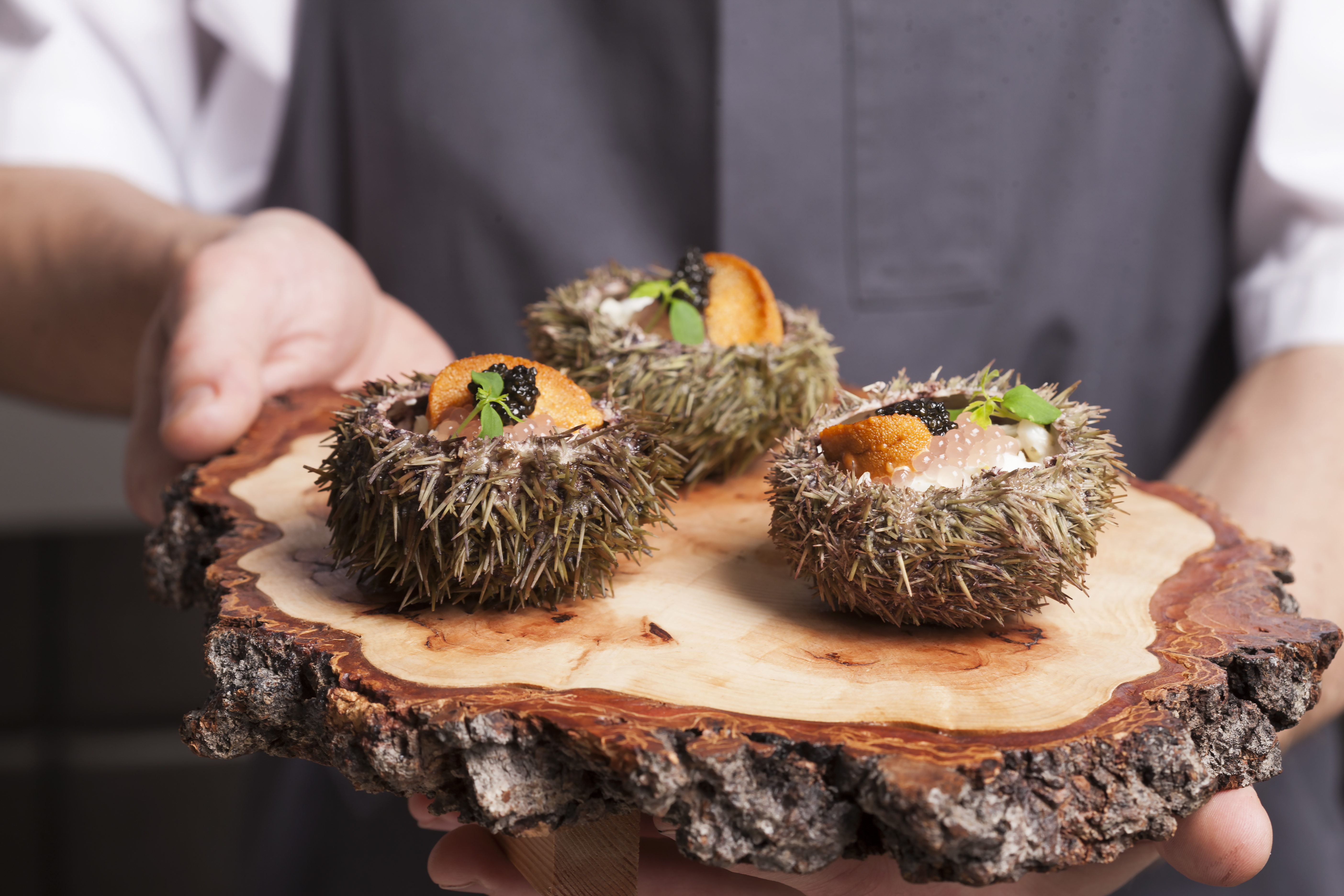 sea-urchins-and-chef